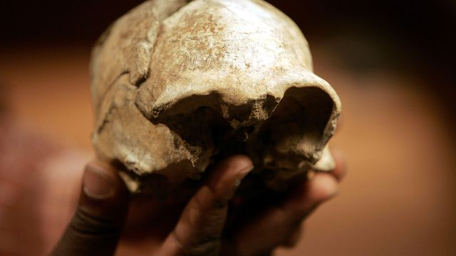 Frederick Kyalo Manthi , Phd, holds the H. erectus complete skull he discovered in 2000 near lake Turkana in Kenya, Wednesday, Aug. 8, 2007 at the National Museum of Kenya in Nairobi. Surprising fossils dug up in Africa are creating messy kinks in the iconic straight line of human evolution from knuckle-dragging ape to briefcase-carrying man.(AP Photo/Karel Prinsloo)