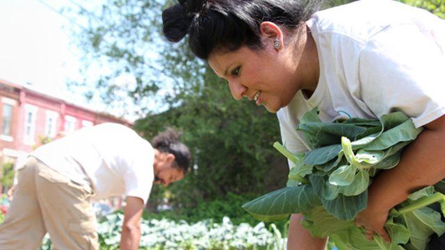 Nohemi Soria and Pedro Rodriguez harvest collard greens in Camden, N.J. (Photo: Kristin Moe)