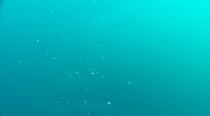 Methane bubbles rising from the Arctic Ocean floor.