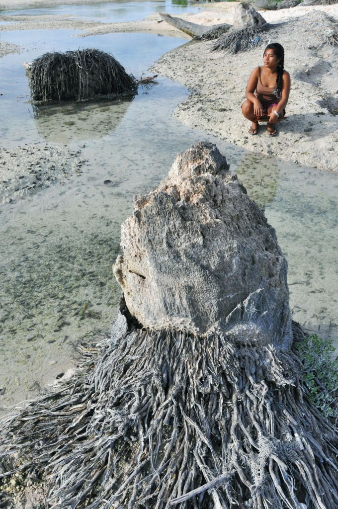 TARAWA, Kiribati - A coconut tree is withered from the impact of rising sea levels near the shore in Tarawa, Kiribati, on May 16, 2012. The South Pacific island nation is considered particularly vulnerable to global climate change. (Kyodo)