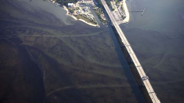Algae blooms (dark colors) flourish under the Coleman bridge over the York river in Yorktown, Va., Saturday July 31, 2010. Torrential rain combined with temperatures soaring above 100 degrees farenheit, and pollution made for ideal algae bloom conditions, (AP Photo/Morgan Heim/iLCP/Chesapeake Bay Foundation)