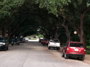 Steel Street at the intersection of Kirby and Alabama, in the heart of Houston's cultural district: 35 100-year-old live oak trees dominate the street amidst historic 1940s housing set to be torn down. (Anis Shivani/May 2014)