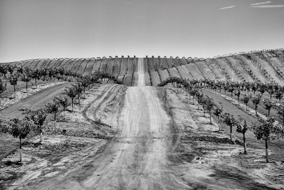 A newly planted pistachio orchard near Ducor in California's Central Valley. Photo by Matt Black.