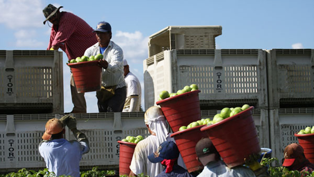 (Photo:Coalition of Immokalee Workers)