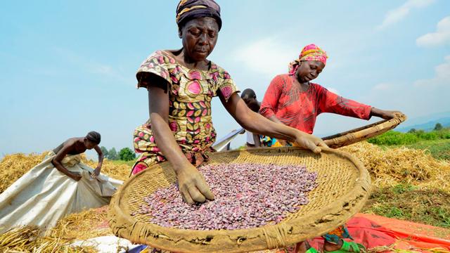 Women farming beans, CIAT
