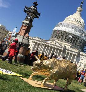 Golden calf in front of Capitol.