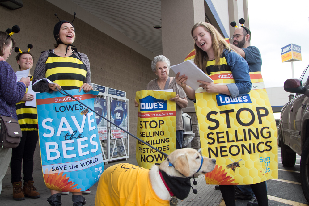"Activists from SumOfUs.org rallied outside a Lowe's in Philadelphia in 2014 to build awareness of bee-killing pesticides — known as neonics. More than 750,000 signed the petition calling on Lowe's shareholders and executive leadership to stop selling the pesticides. (<a href=""https://www.flickr.com/photos/sumofus/15039395444/in/photolist-o8zvJ5-oq3cjG-pzkJNp-pzkK5M-pRUxjd-oV2VSg-oUYQrJ-efe3d3-oUYQis-e6yFsd-e6t3tk-pPJGJw-oV2VVH-pzohMu-pzkKbi-pzkJVZ-pRAype-pPJGJS-oV2VB6-o8zuy7-oo3f4W-oaDer7-ocv2Wt-o8AJNg-nTehxj-nTfkzX-oaA319-nTehHj-oaDebs-oaA2Gd-orPNyV-oq3xTY-oaHYhT-oaqwY6-nTex4T-e6t3Fg-e6yFiE-e6yFpY-cMppyL-oV2Vxt-e6yFk5-oMkyvL-e6yFmC-p4MLAy-e6t3vX-cMpps5-e6yFn9-p4Pu7F-cMppvs-e6yFky/"">SumOfUs</a>/<a href=""https://creativecommons.org/licenses/by/2.0/"">Flickr cc 2.0</a>)"